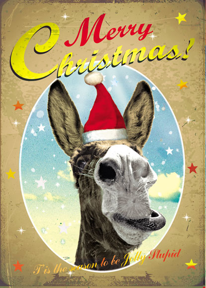 Merry Christmas Donkey Pack Of 5 Greeting Cards By Max Hernn